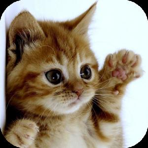 Kittens Make Everything Better.