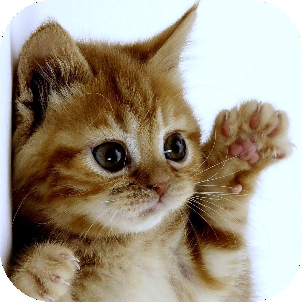 Funny Cat  Minutes